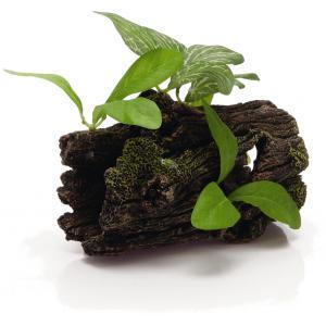 Dikke boomstronk met planten aquarium decoratie