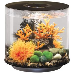 https://www.huisdierexpress.nl/image/cache/data/biorb/biorb-tube-aquarium-15-liter-led-zwart/biorb-tube-aquarium-15-liter-led-zwart-822728008942-0_300x300.jpg