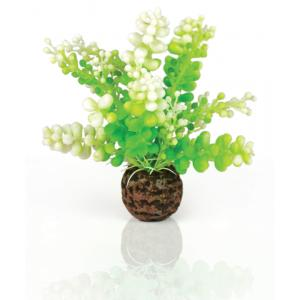 BiOrb Caulerpa groen aquarium decoratie